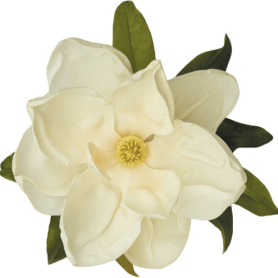 cropped-Magnolia-flower